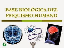 Psíquismo Humano