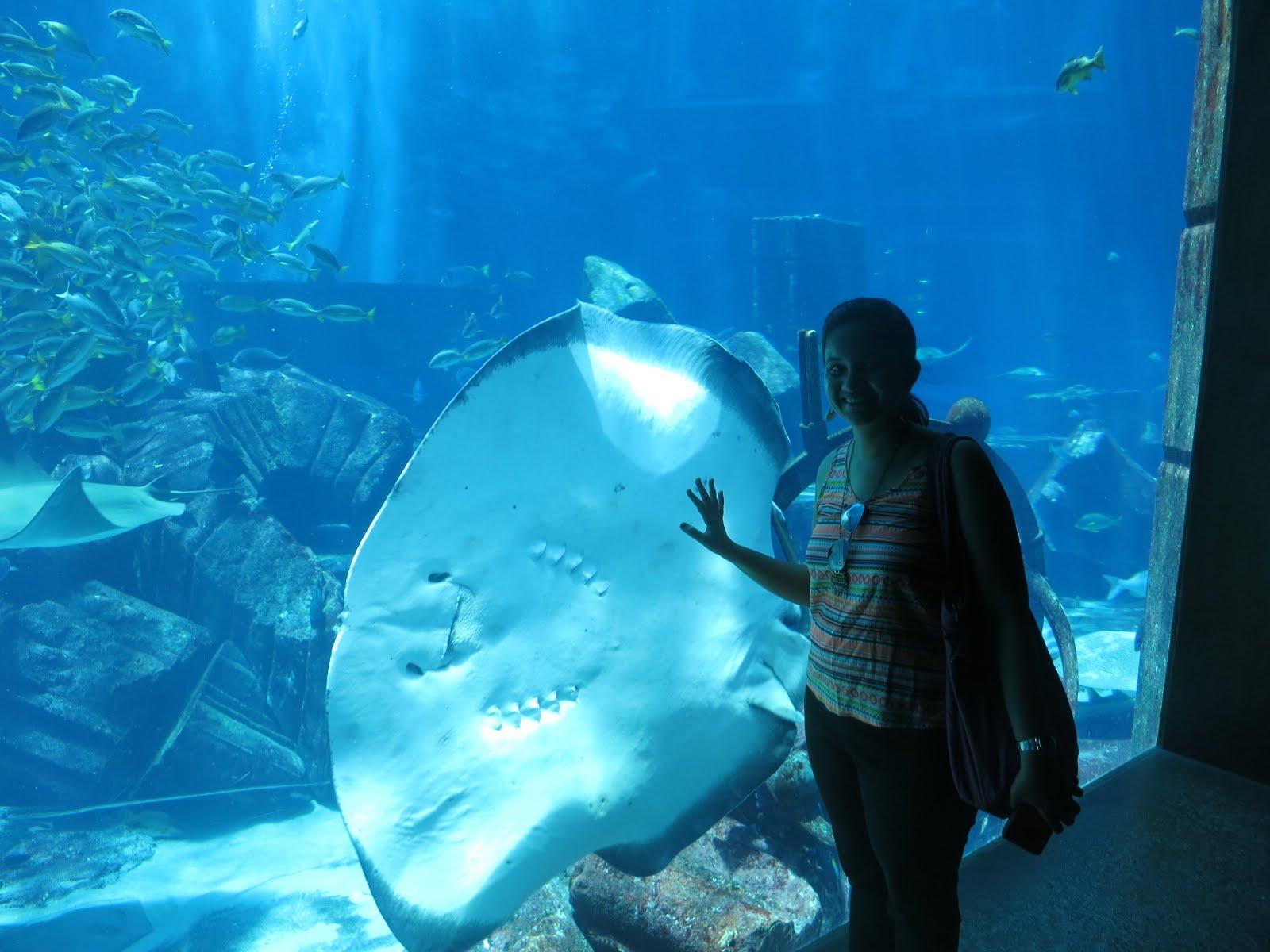 Fish aquarium in umm al quwain - All A Regular Traveller Can Afford At This Hotel Is The Amazing Aquarium The Lost Chambers Aquarium Ticket Price Per Person 125 Dirham