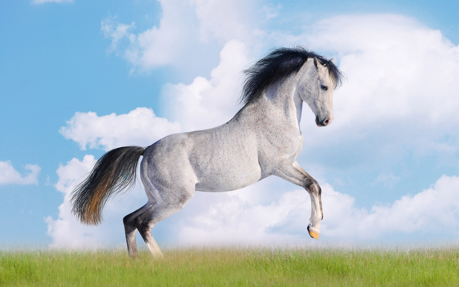 Amazing   Wallpaper Horse Nature - White_Horse_Desktop_WallpaperS_Download  Collection_46378.jpg