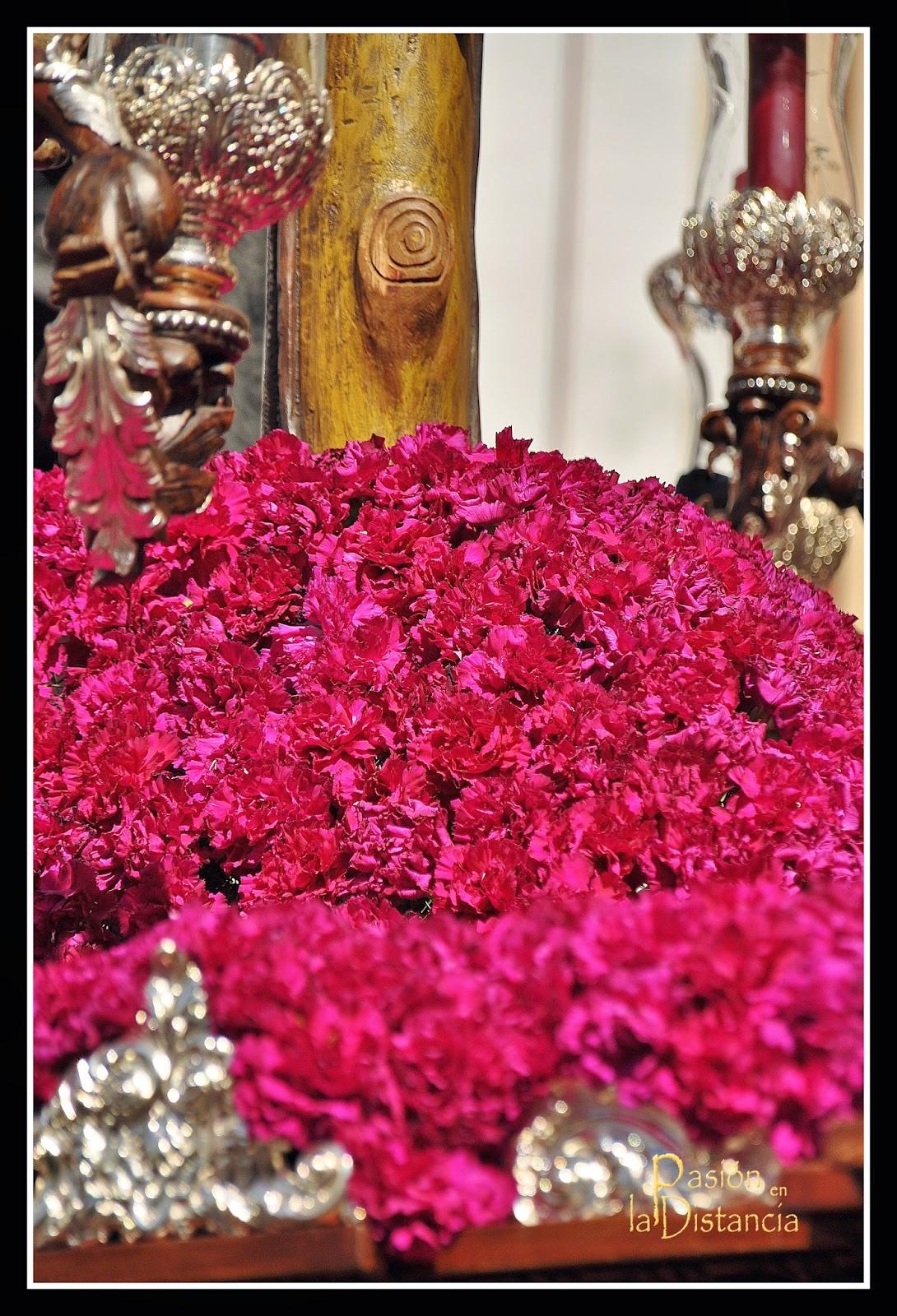 Flores Cristo del Desamparo y Abandono hacia Alemanes Sevilla 2015