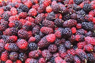 Mulberry Yogurt Icecream (Kem Sữa Chua Dâu Tằm) 1