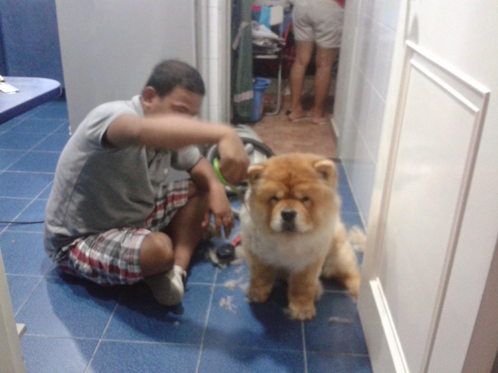 Hong Kong Blog An Englishman His French Wife Their Chow Dog1