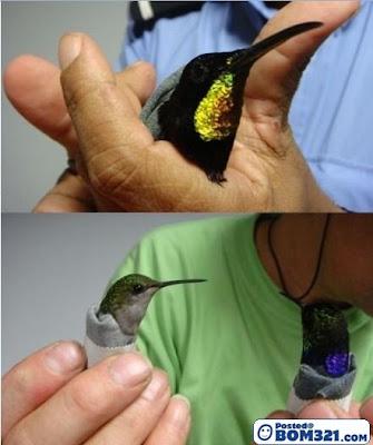 Seludup Burung Dalam Seluar