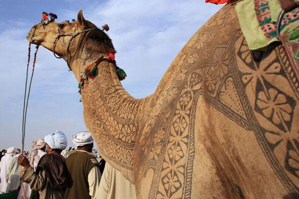 Bikaner,Camel Festival