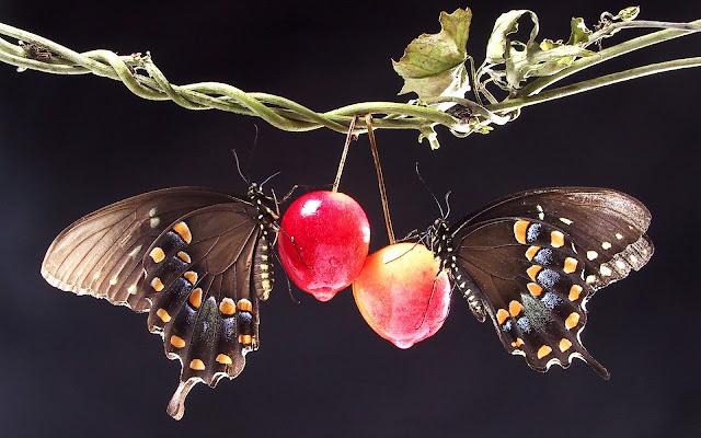 Best Jungle Life butterflies photos, butterflies backgrounds, butterflies wallpapers