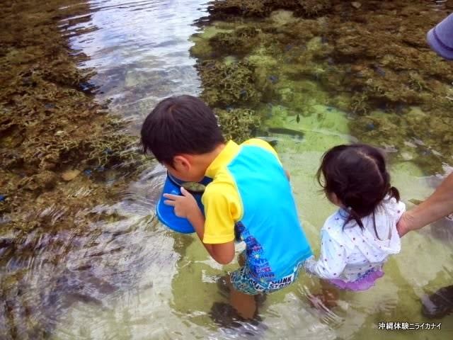 体験/観光 海 ビーチ 生き物 夏休み