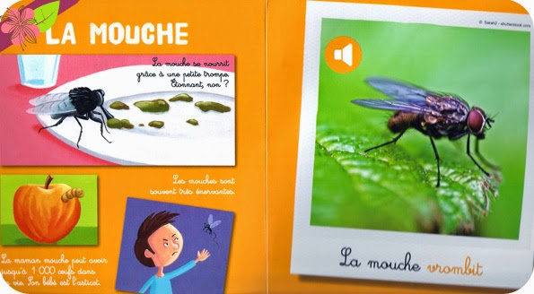 """""""Les petites bêtes"""" illustrations de Christophe Boncens"""