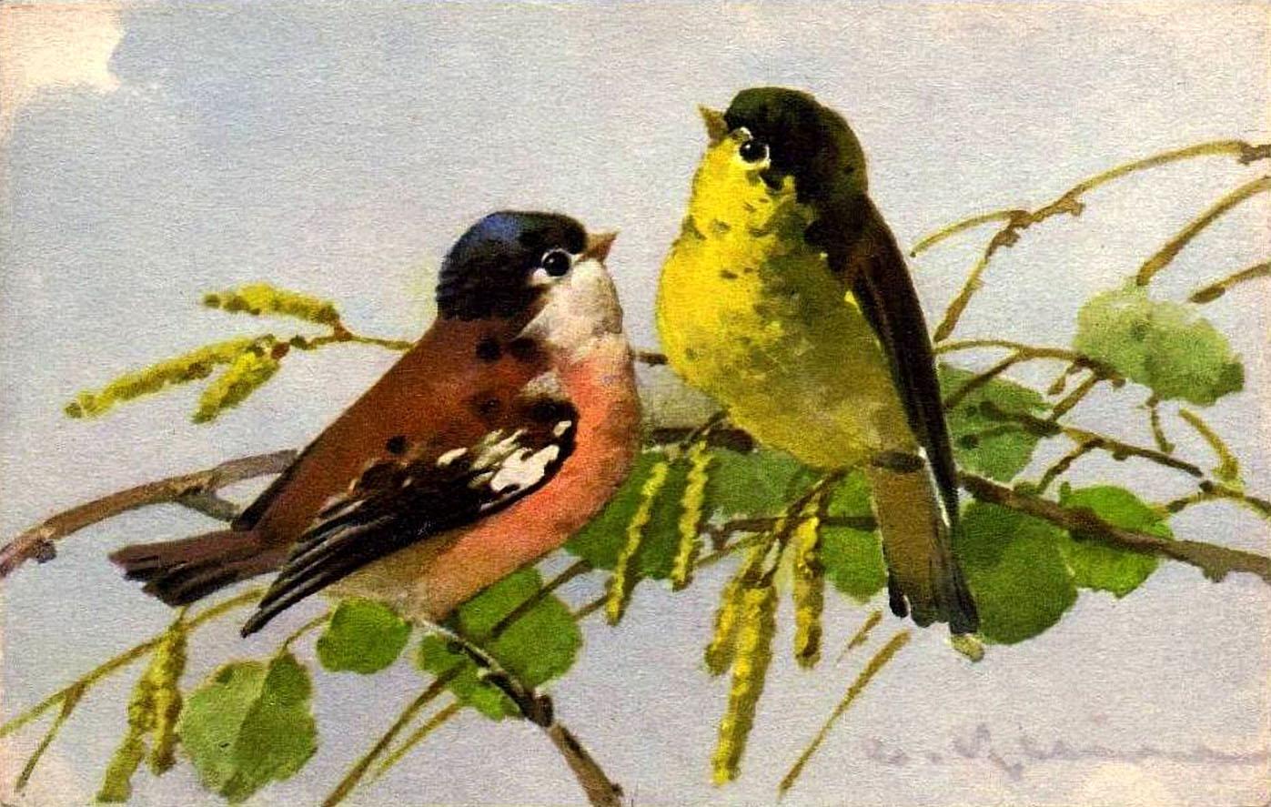 Catherine klein птицы часть 1