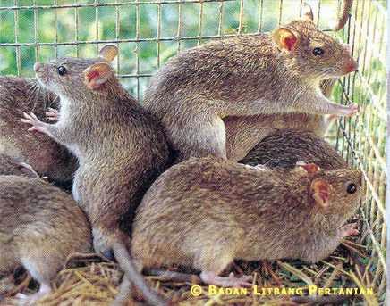 gambar hewan omnivora - gambar hewan