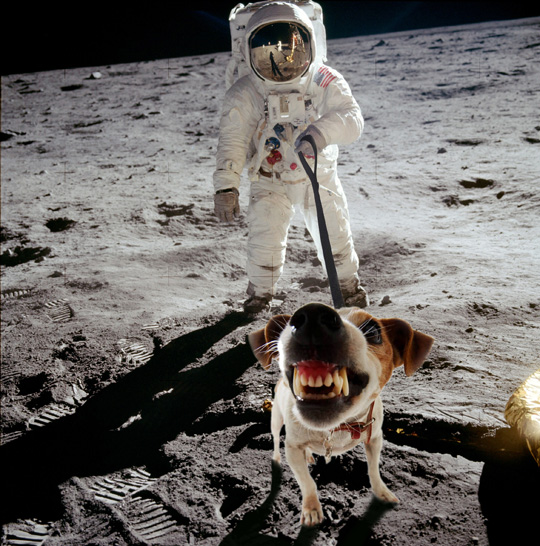 dog in space apollo - photo #14