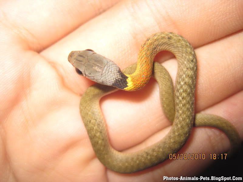 http://1.bp.blogspot.com/-Oe0Z_r-ESyM/TXkdOtl3chI/AAAAAAAAAD0/H1BZcbiv3CQ/s1600/snake%2Bpictures%2B_0001.jpg