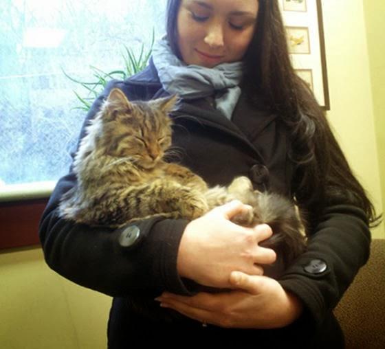 foto kucing kantor 03