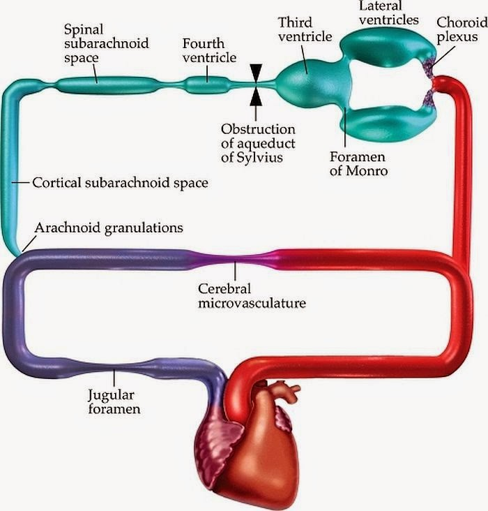 Human Body Flow Diagram Schematics Wiring Diagrams