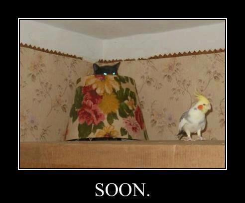 Soon... Soon...