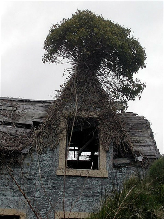 7 Amazing Houses Built Into Nature: Abandoned And Back To Nature 10 Old Homes : Pictures
