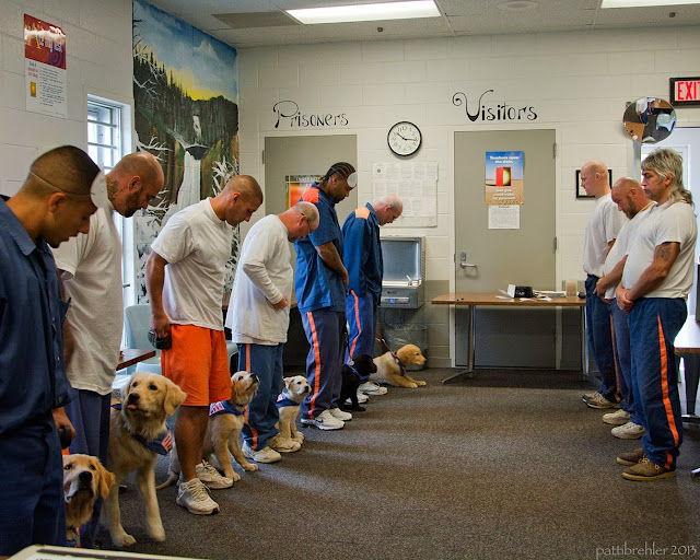 Six men, each with puppies, stand in a line on the left side of a brick walled room. Three other men are facing them in a line on the other side of the room. Some of the puppies are looking up at their handlers.