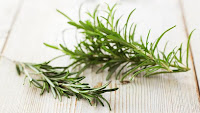 rosemary for treating dandruff