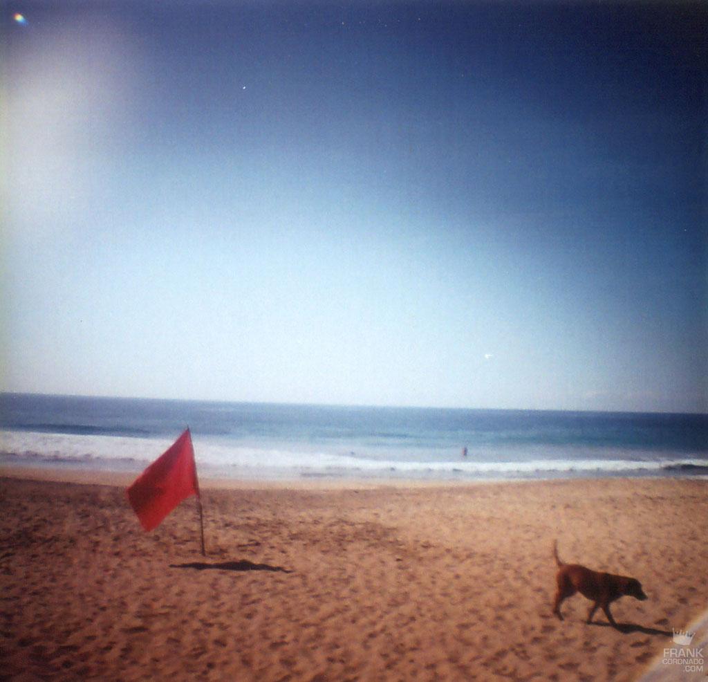 Perro en playa san agustinillo oaxaca