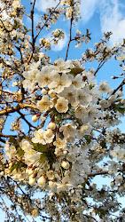Härliga våren