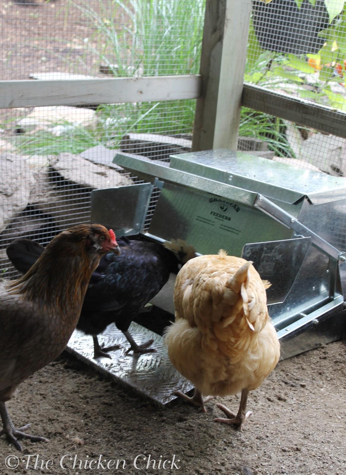 the chicken grandpa u0027s feeders save money on feed