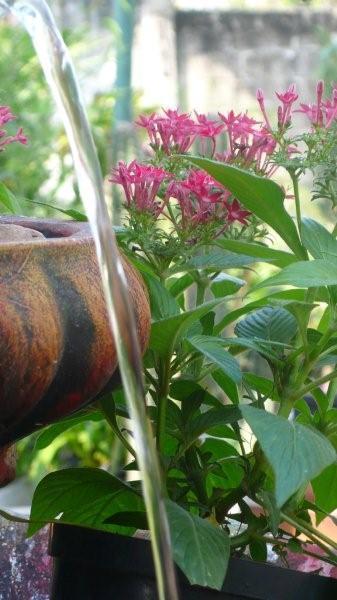 Esencial barranquilla vivero los almendros for Viveros arboles ornamentales