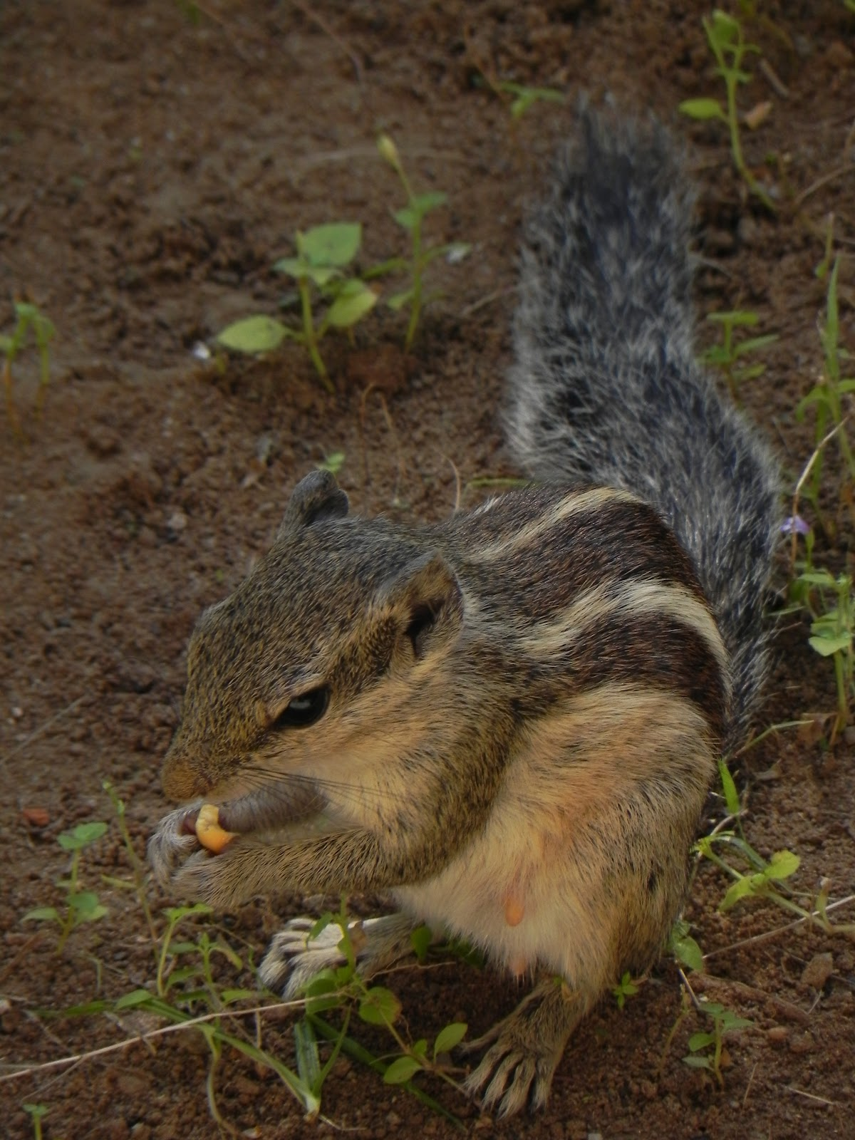 squirrel hindu personals Today's news headlines, breaking news & latest news from india and world, news from politics, sports, business, arts and entertainment.