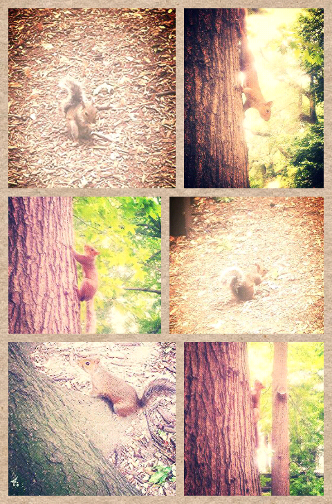 Central Park squirrels
