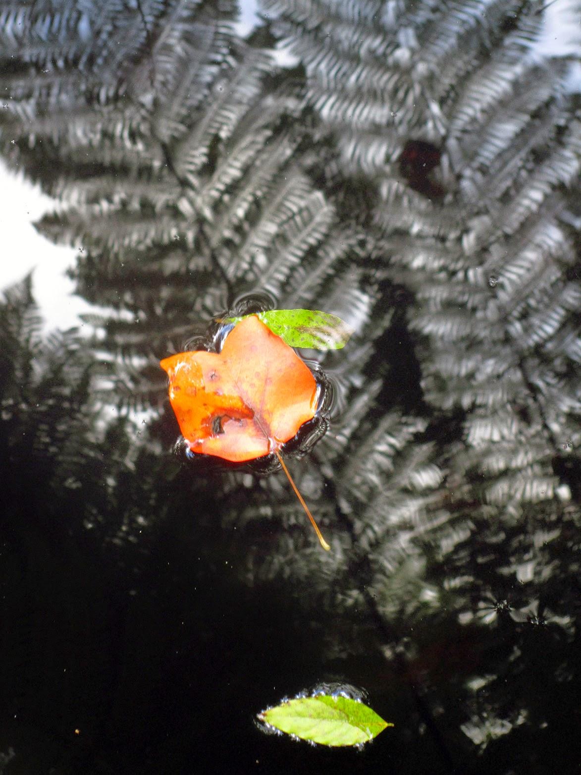 floating orange and green leaf