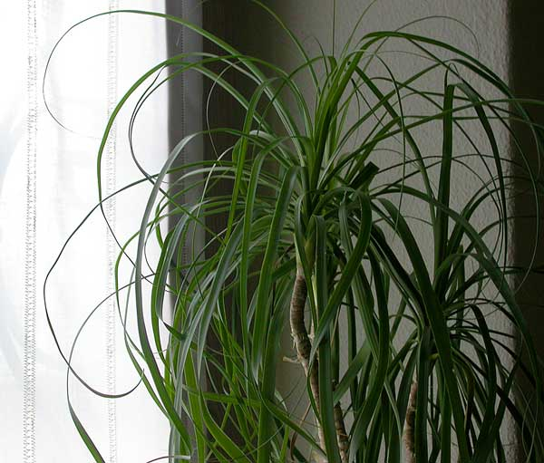 Tuttiicoloridellanima pianta da pianerottolo for Piante verdi da interno