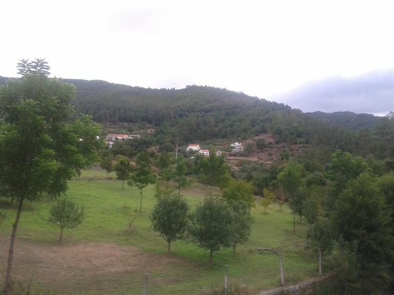 Campos verdejantes em Vila Cova