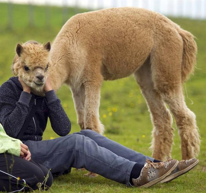 Las Mejores Fotografías de Animales