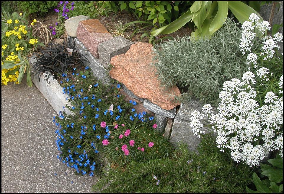 Un giardino di perenni in ticino blu paradisiaco - Piante perenni per giardino roccioso ...