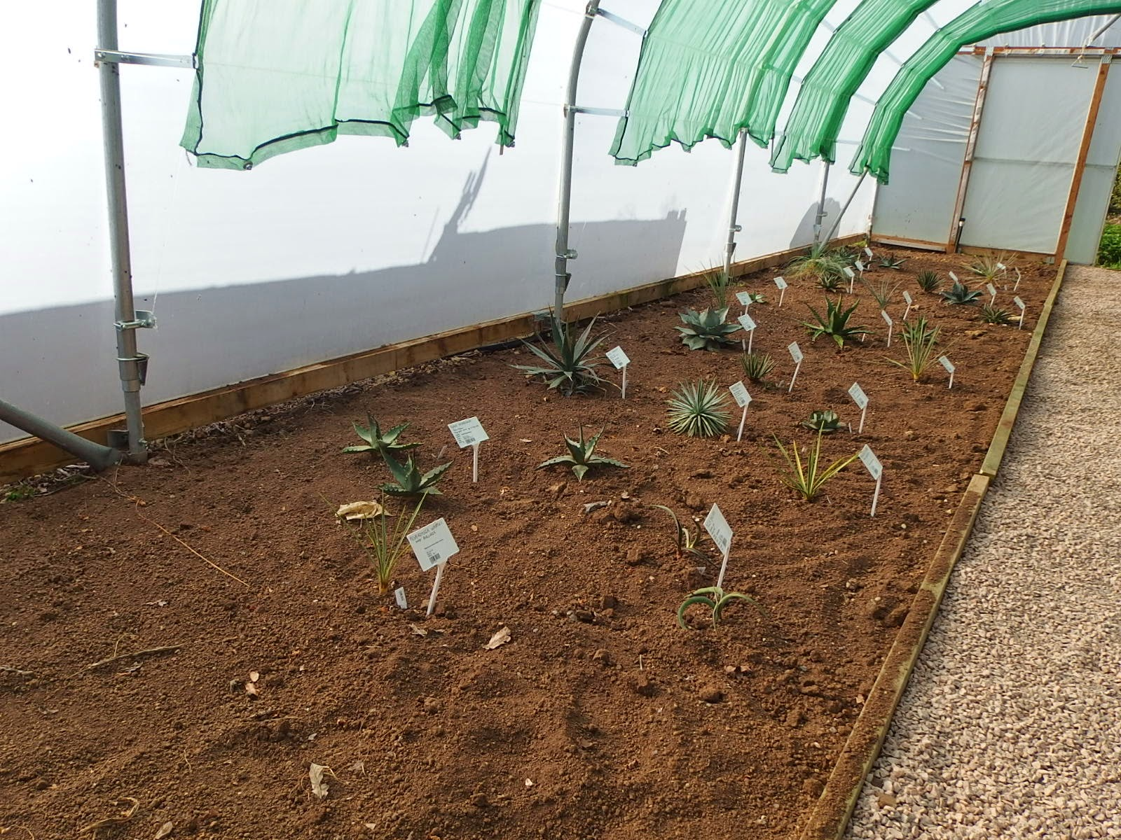 New display of agaves and yuccas