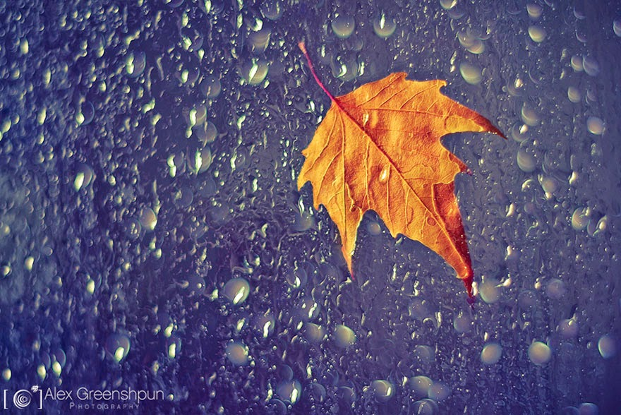 Leaf in the rain photograph