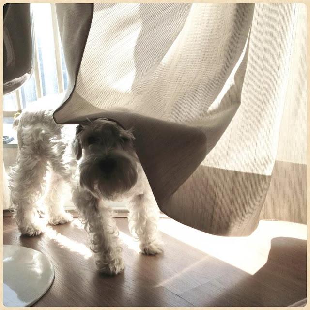 cachorro no sol