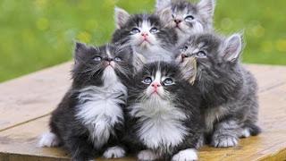 صورة مدهشة للقطط متجمعة بنظرة متشابهه