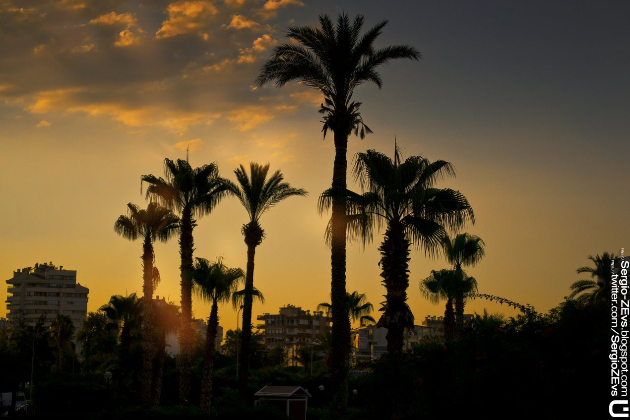 Sunset, Antalya, Turkey, Palm, Street, Пальмы, Анталия, Турция, лучи, солнце