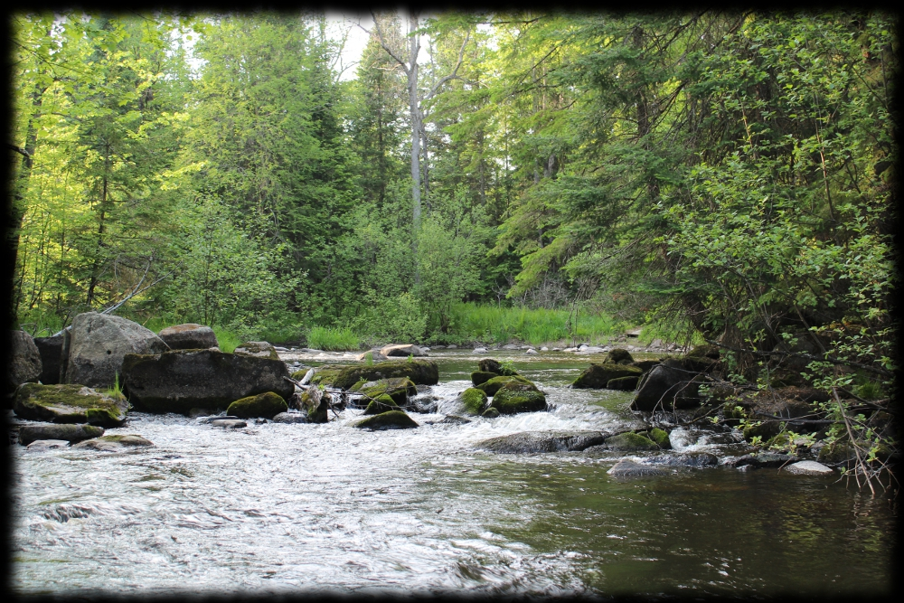 Illinois wisconsin fishing wisconsin 39 s northwoods brook for Fish and stream