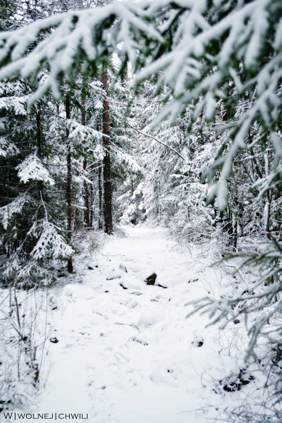 Śnieżna kraina