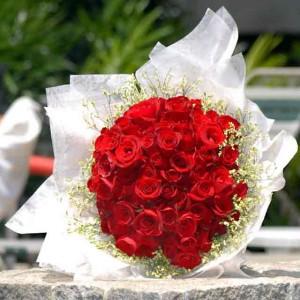 أجمل الورود الحمراء ShowImage