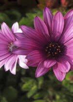 Sígueme en mi Blog de Jardinería