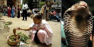 perempuan india menikah dengan raja kobra rev2 7 Manusia yang Kawin dengan Binatang