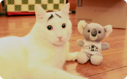 sam, el gato de cejas preocupadas