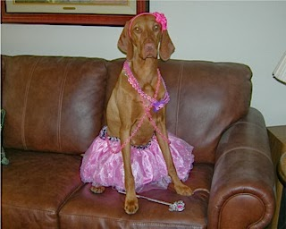 Princess Rose Bud. What a good sport. She won the contest at our vet.