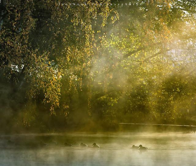 Nadolnik, autumn, Brda