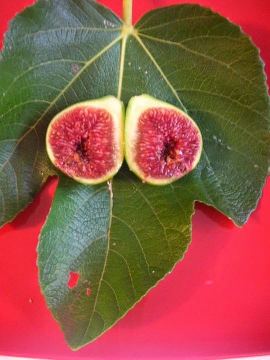 Figs : GREEN ISCHIA