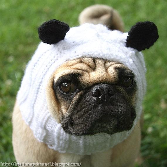 Funny dog panda.