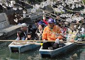 Festival Ohanami