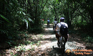 Group in Bamboo Forest - Bali Countryside Cycling Tour Tracks
