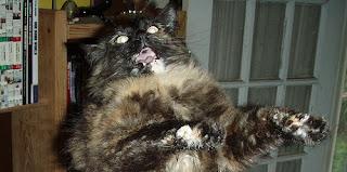 Reaksi Kucing Jika Menonton Film Yang Menakutkan]
